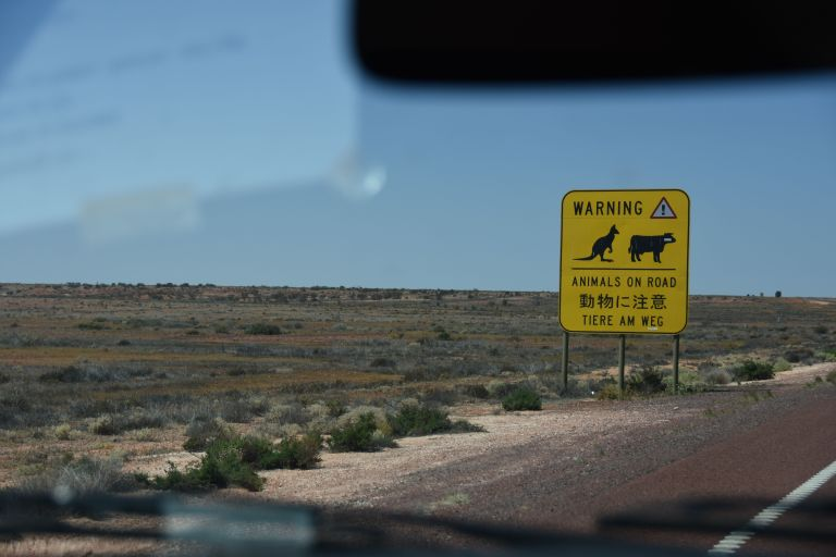 """chase to solar car, now entering an 'animals on the road' zone"""