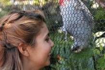 Me and the African Gray
