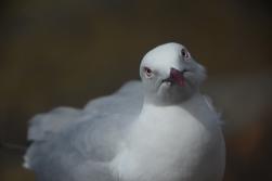 """bird to peanuts: """" mine? """""""