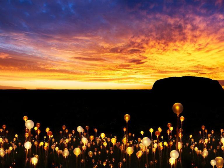 field-of-lights-50213-crop.jpg
