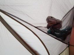Sharky camps